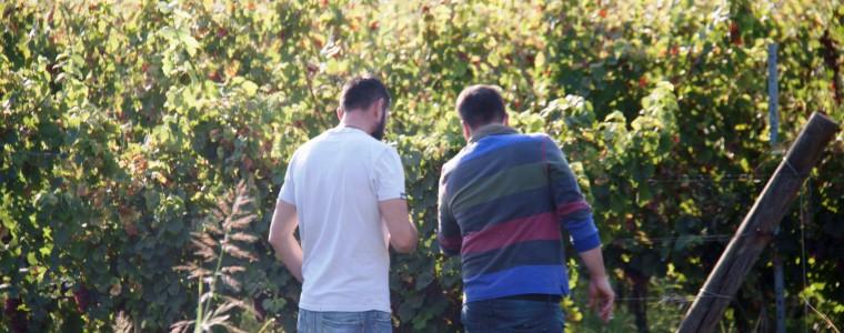 Vendemmiando i vini Tognazza